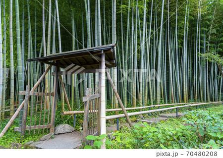 【神奈川県】鎌倉 英勝寺の美しい竹林 70480208