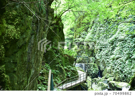 緑鮮やかな山乗渓谷と遊歩道 岡山県真庭市 70499862
