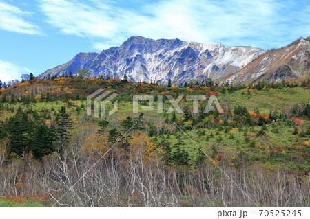 黄葉の栂池自然園に映える青空と白馬岳 70525245