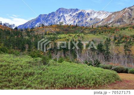秋の栂池自然園緑と黄葉と白馬岳のコラボ 70527175