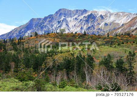 黄葉栂池自然園の黄色・緑と白馬岳と青空コントラスト 70527176