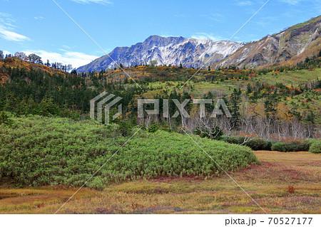 秋の栂池自然園草紅葉に染まる湿原と黄葉と白馬岳 70527177