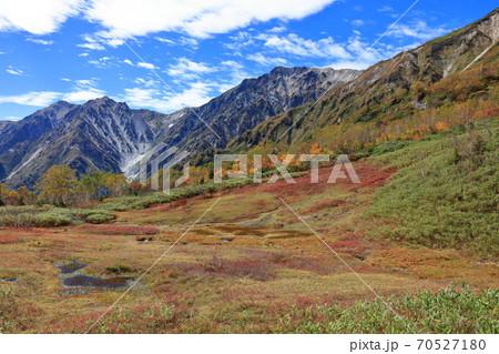 栂池自然園展望湿原の草紅葉と白馬岳・小蓮華岳 70527180