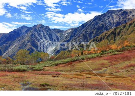 秋の栂池自然園草紅葉と北アルプスと青空のコントラスト鮮やか 70527181