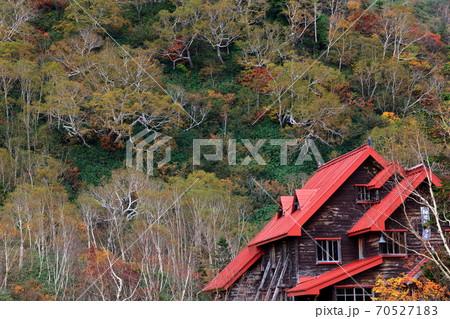 栂池自然園白樺の黄葉に包まれる山岳ロッジ 70527183