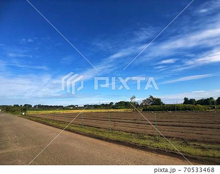青空と道路沿いに広がる畑がある田舎の長閑な風景 70533468