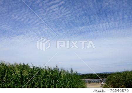 葦の穂:秋の空:羊雲:大阪府淀川上空 70540870