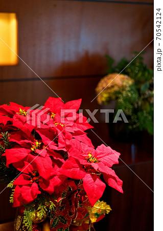 12月の部屋に飾られた赤いポインセチア 70542124