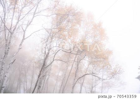 《長野県》秋の志賀高原・霧つつまれた紅葉 70543359