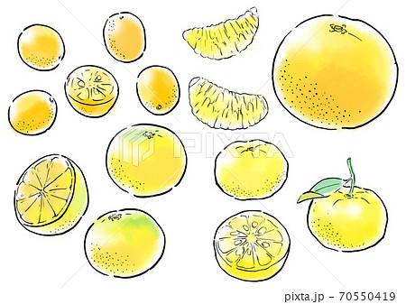 柑橘類 ミカン  70550419