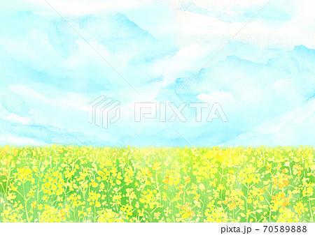水彩で描いた菜の花畑のイラスト 70589888