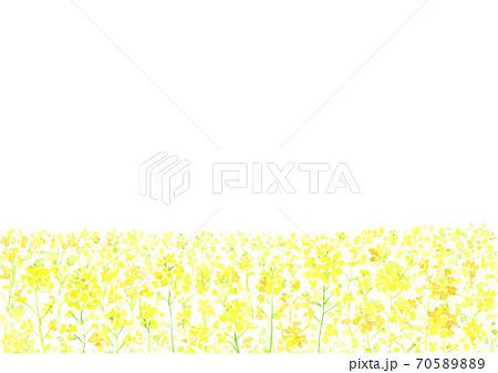 水彩で描いた菜の花の背景イラスト 70589889