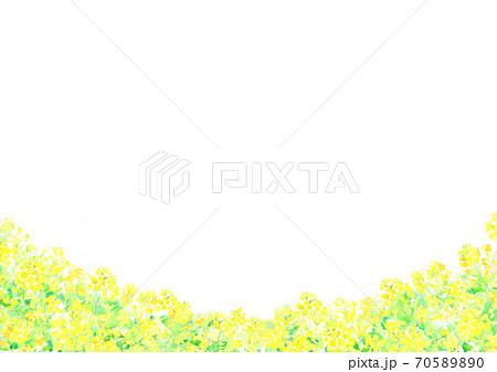 水彩で描いた菜の花畑のイラスト 70589890