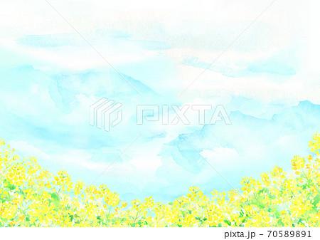 水彩で描いた菜の花畑のイラスト 70589891