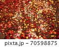 紅葉と黄葉の落ち葉に差し込む陽の光 70598875
