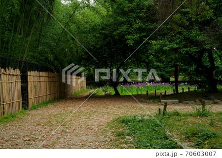 兵庫県尼崎市・竹林や菖蒲園のある尼崎市立農業公園の風景 70603007