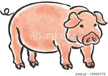 豚 70608779