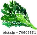 春菊 70609351