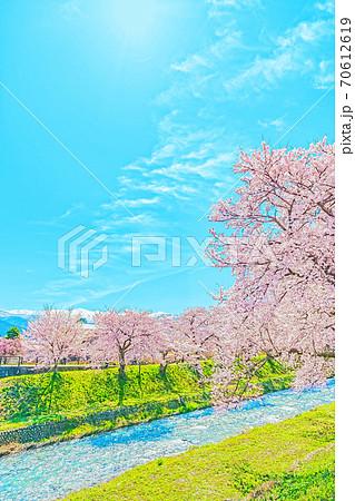 [アニメ風] 日本の春 富山県 舟川べり 清流沿いの桜並木 70612619