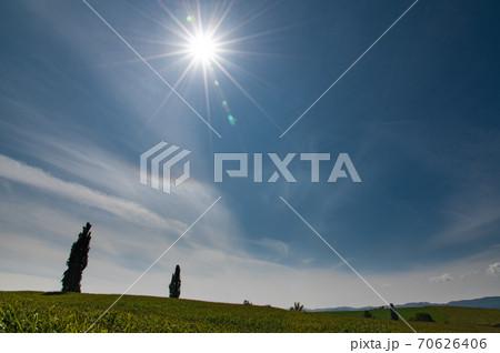 10月美瑛のパッチワークの丘のポプラ 70626406