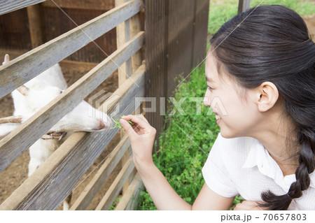 山羊に餌をやる女性 70657803