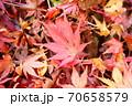 紅葉の落ち葉 70658579