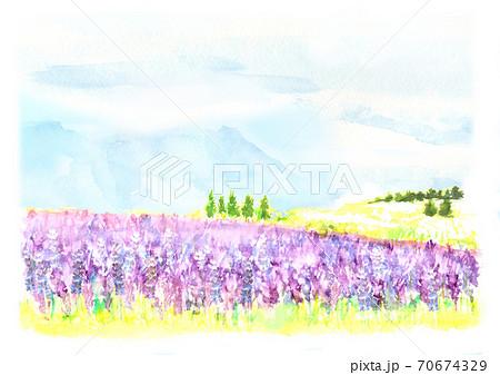 水彩で描いたラベンダー畑の風景 70674329