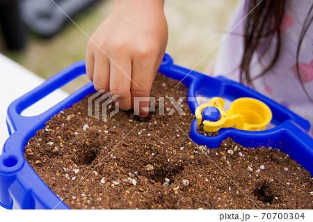あさがおの種植えをする女の子の手元 70700304
