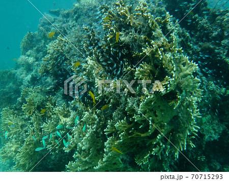 石垣島で体験ダイビングしたときの水中写真 70715293