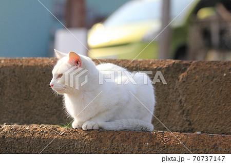 段差のところで顔に夕日をあびながら箱座りをし一点を見つめる白猫 70737147