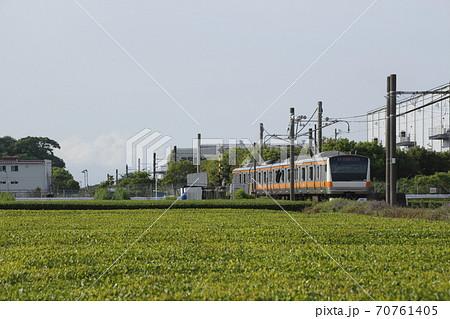 茶畑を行く八高線(中央線直通列車) 70761405