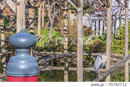 [東京・亀戸] 亀戸天神社の橋の擬宝珠と池の藤棚に立つ鶴 70783712