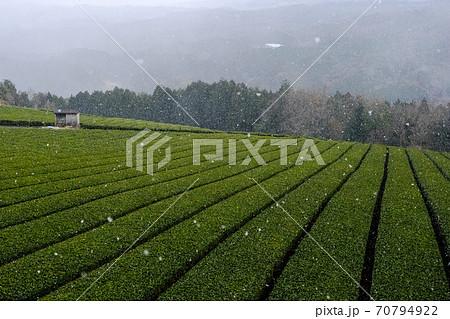 雪降る茶畑(奈良県山辺郡山添村) 70794922