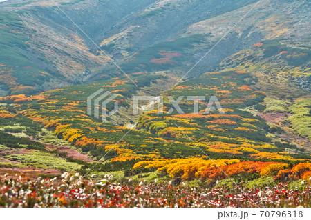 大雪山 旭岳 紅葉 紅葉前線 70796318