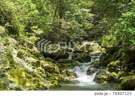 苔むした岩と森の中の奥十曽渓谷の流れ 70807125