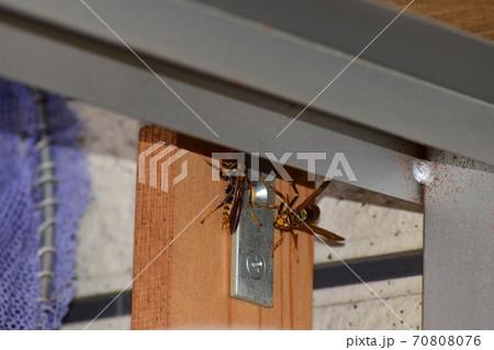 スズメバチから逃げたアシナガバチ 70808076