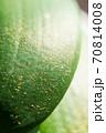 葉の上に落下した胡蝶蘭の小さな種 70814008