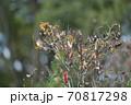 秋の終わりに枯れ枝に集まる雀 70817298