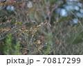 秋の終わりに枯れ枝に集まる雀 70817299