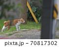 街を歩く茶色い背中で白い足の猫 70817302