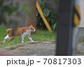 街を歩く茶色い背中で白い足の猫 70817303