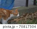 街を歩く茶色い背中で白い足の猫 70817304