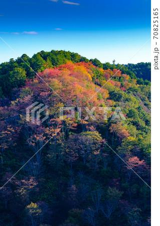 吉野山の紅葉 70825165