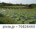 景色 風景 植物 70826460