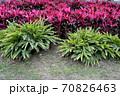 花 フラワー お花 70826463