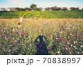 秋の風物詩、第花壇に咲き乱れる秋桜(コスモス) 70838997