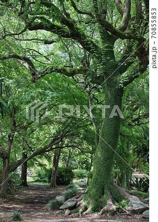 ファンタジー映画に出てきそうなモンスターみたいな樹木 70855853