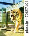 虎とらトラ! 70857104