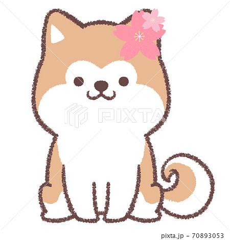 桜お座り秋田犬 70893053