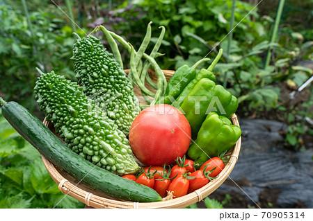 夏野菜の盛り合わせ 収穫 (7月) 家庭菜園 70905314